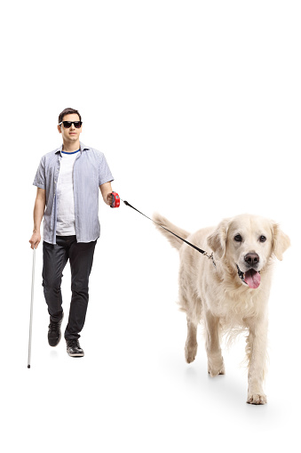 A white lab or golden retriever standing in the foreground. In the background there is a young blind man